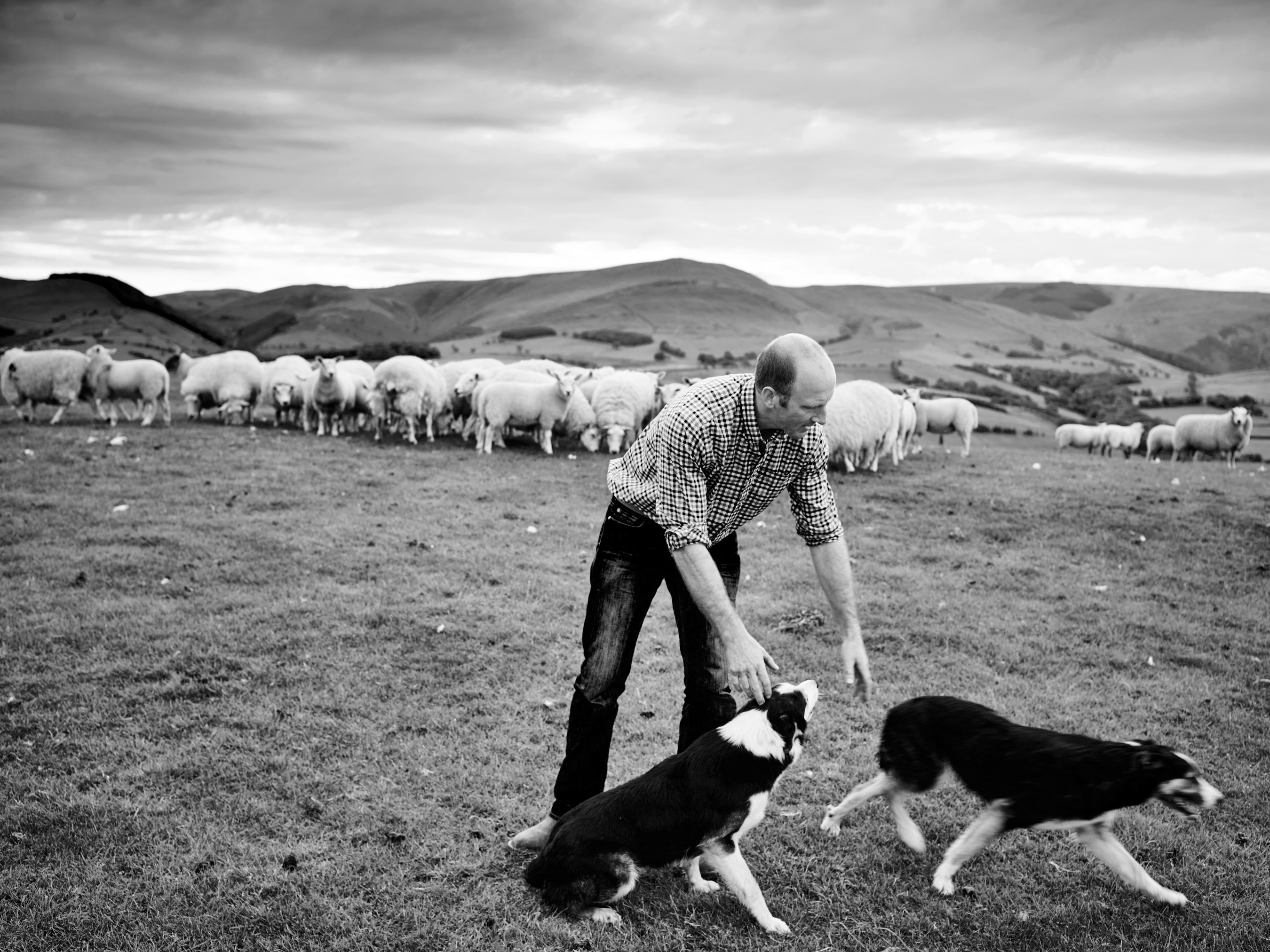 Matt-Stansfield-Photographer-lifestyle-food-producers-lamb-604